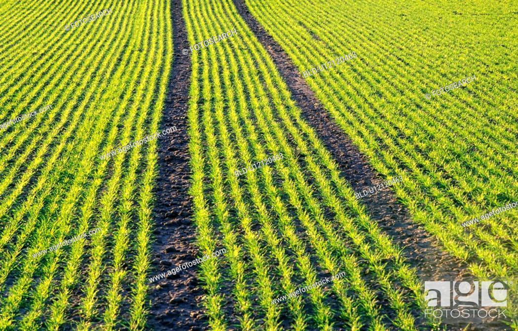 Stock Photo: Agriculture in Austria.