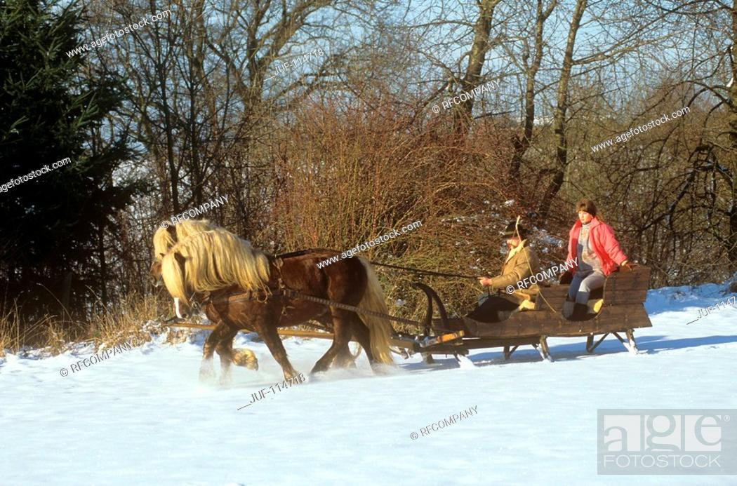 Stock Photo: two Black forest horses pulling sled with woman and man.