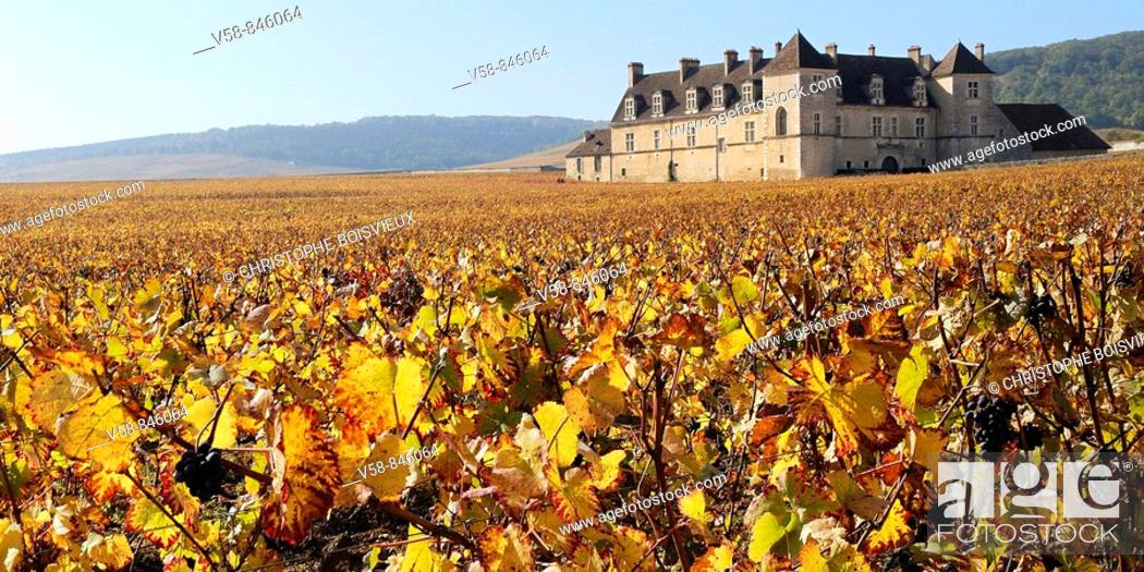 Stock Photo: THE VINEYARD AND CASTLE OF CLOS DE VOUGEOT IN AUTUMN, COTES D'OR, BURGUNDY, FRANCE.