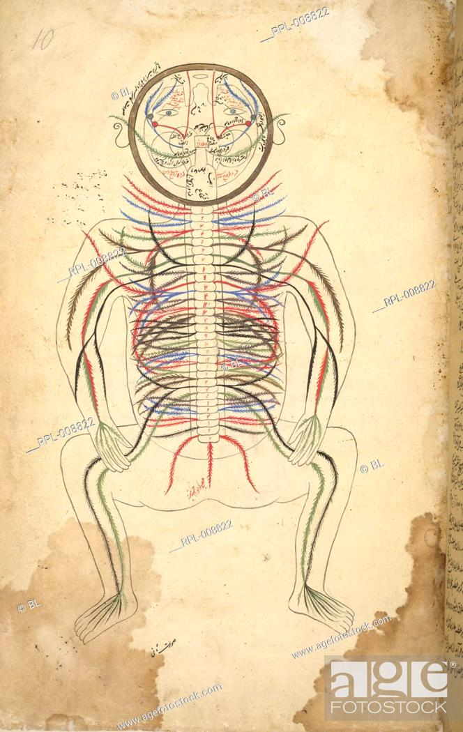 Back View Of A Human Body Depicting The Spine With Thirty Joints And