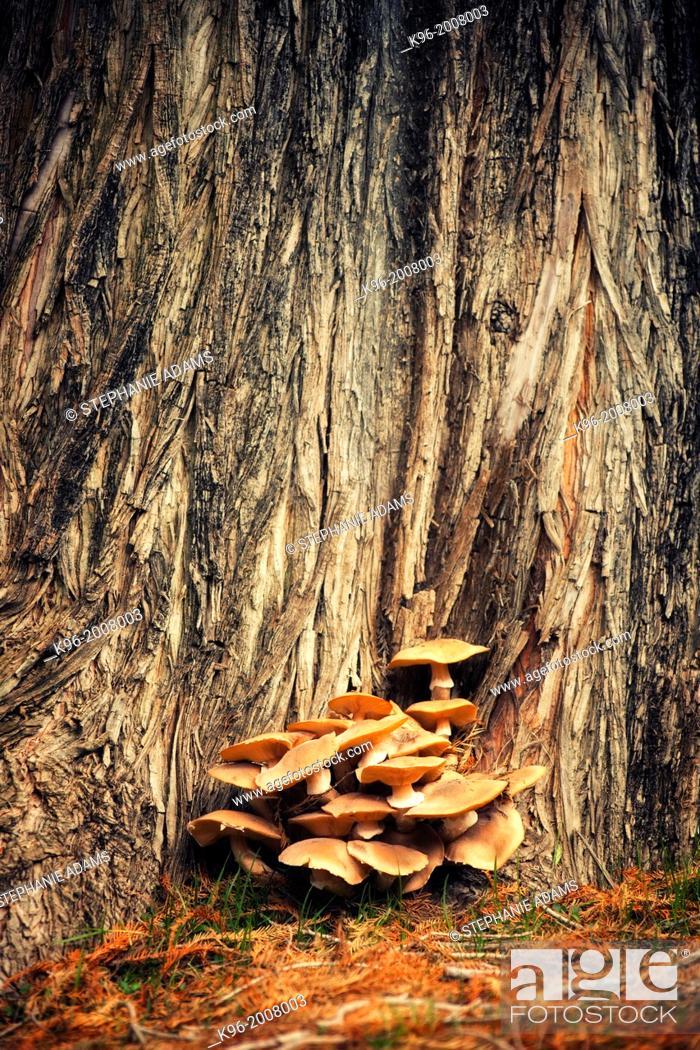 Stock Photo: mushrooms at Fairmount Park in CA.