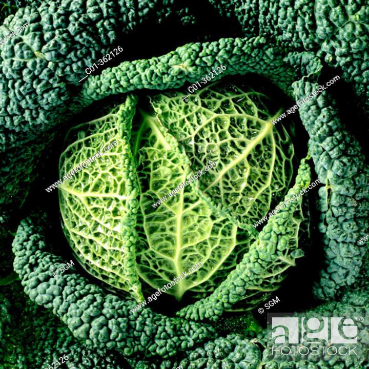 Stock Photo: Savoy cabbage.