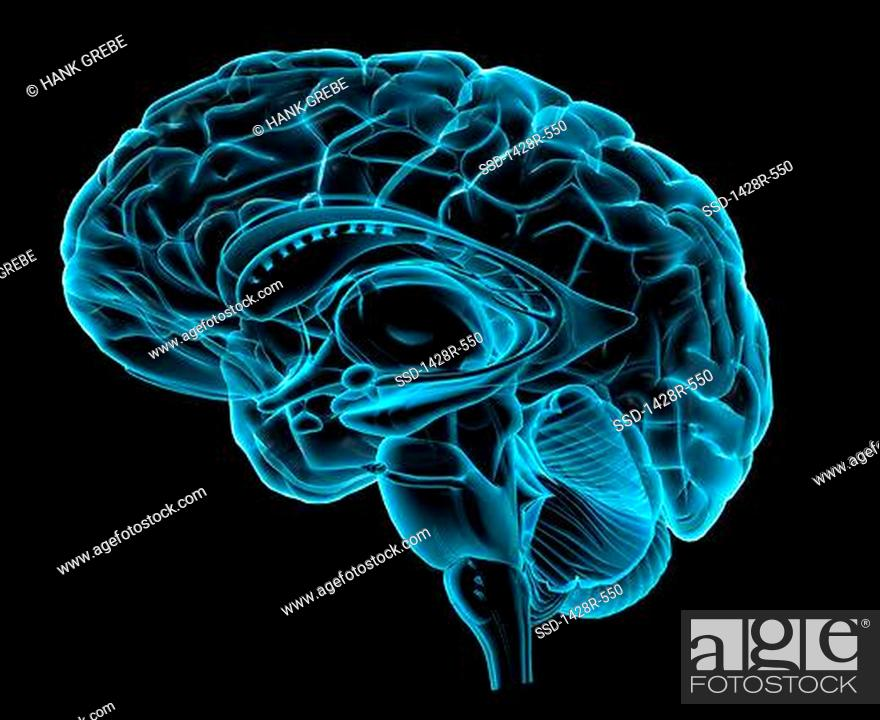 Blue X-ray image of human brain anatomy, 3-D sagittal section side ...