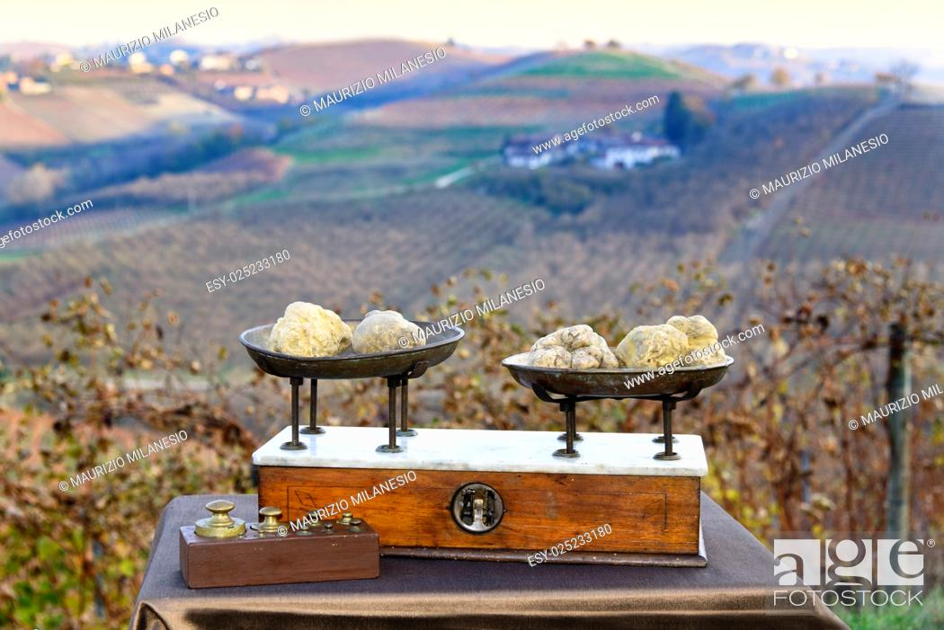 Stock Photo: Some white truffles on the vintage scales, in the background hills with vineyards in autumn Langhe Piedmont Italy.
