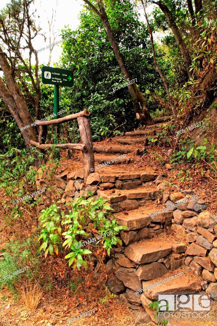 Stock Photo: El Cedro forest in La Gomera island Spain.