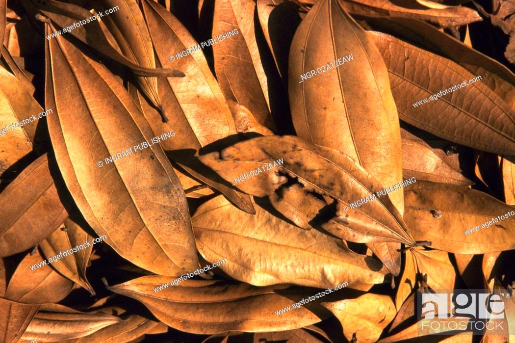 Stock Photo: Close-up of a pile of dry leaves.