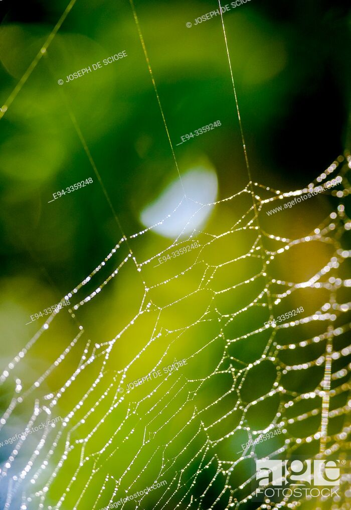 Photo de stock: Detail of a spider web with dew droplets.