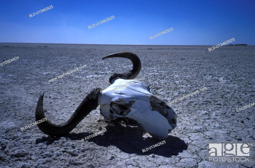 Stock Photo: erde, abandoned, Africa, africa, African, animals, antlers.