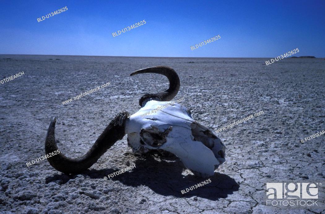 Stock Photo: erde, abandoned, Africa, africa, African, animals, antlers.