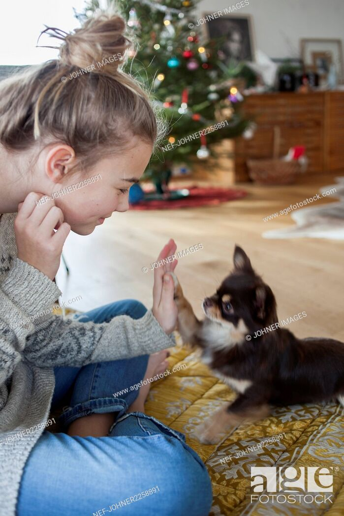 Stock Photo: Girl playing with puppy.