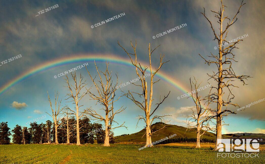 Imagen: Rainbow over dead trees, Cheviot, North Canterbury.