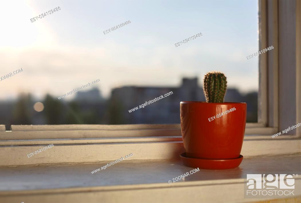 Stock Photo: The beginning of the day. Cactus on the windowsill of the office. Sunrise in a modern city.