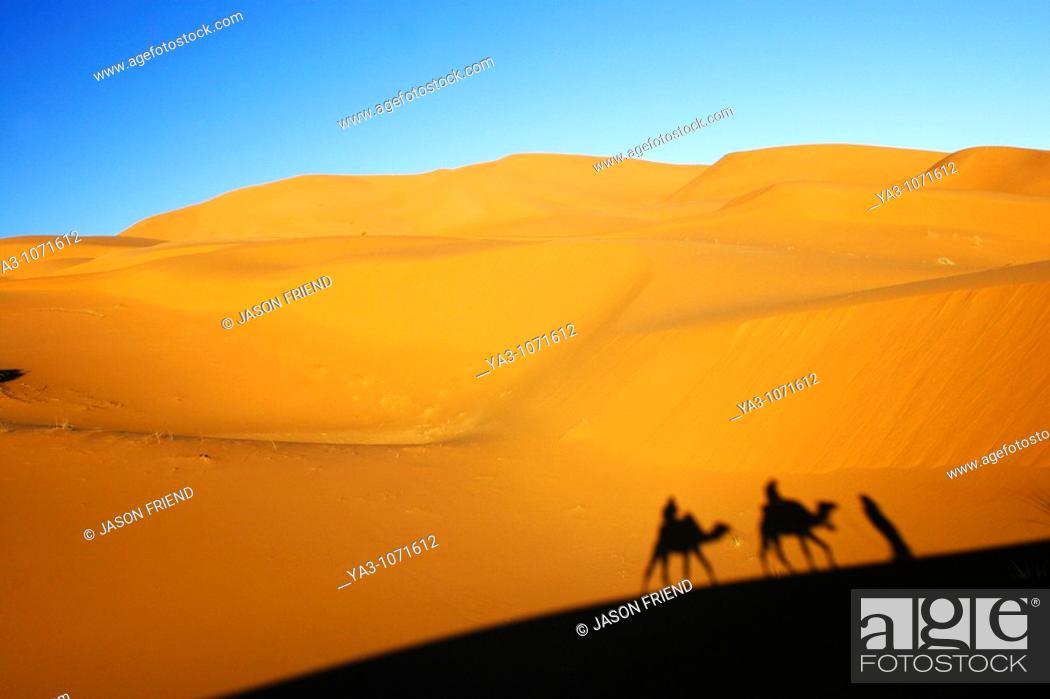 Stock Photo: Morocco, Central Morocco, Merzouga  Camels, tourists and guides shadows are cast on the dunes of the Erg Chebbi in the Sahara Desert.