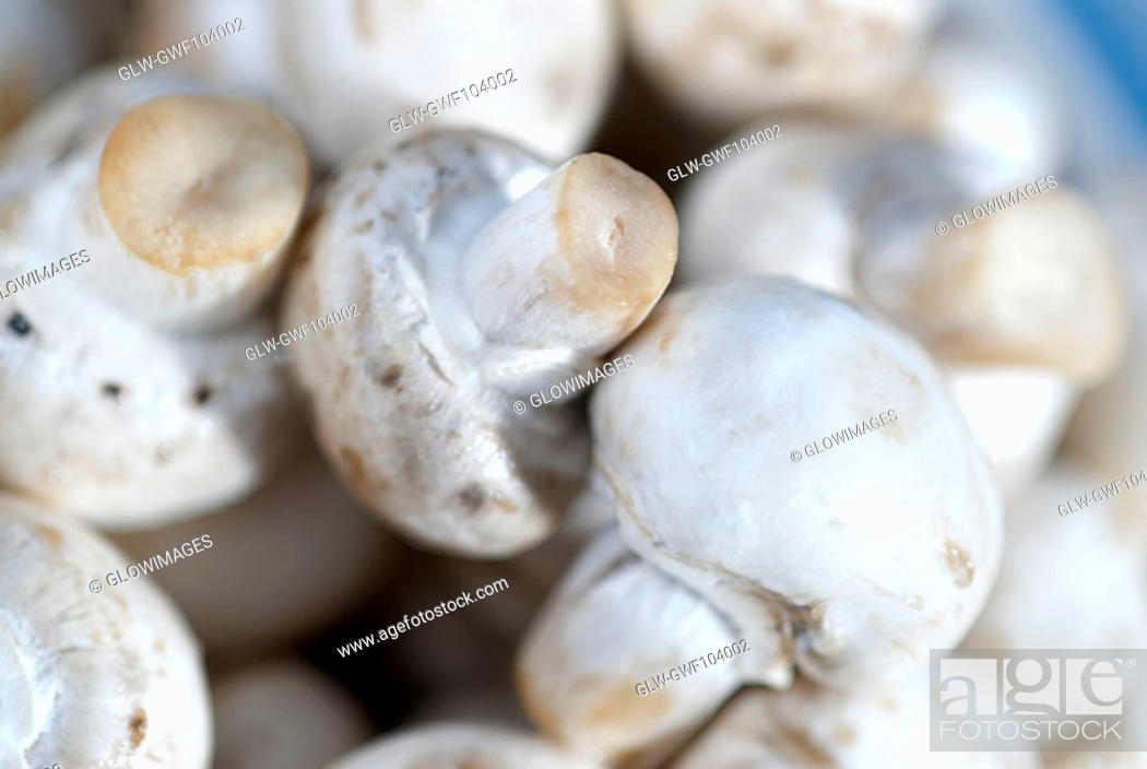 Stock Photo: Close-up of mushrooms.
