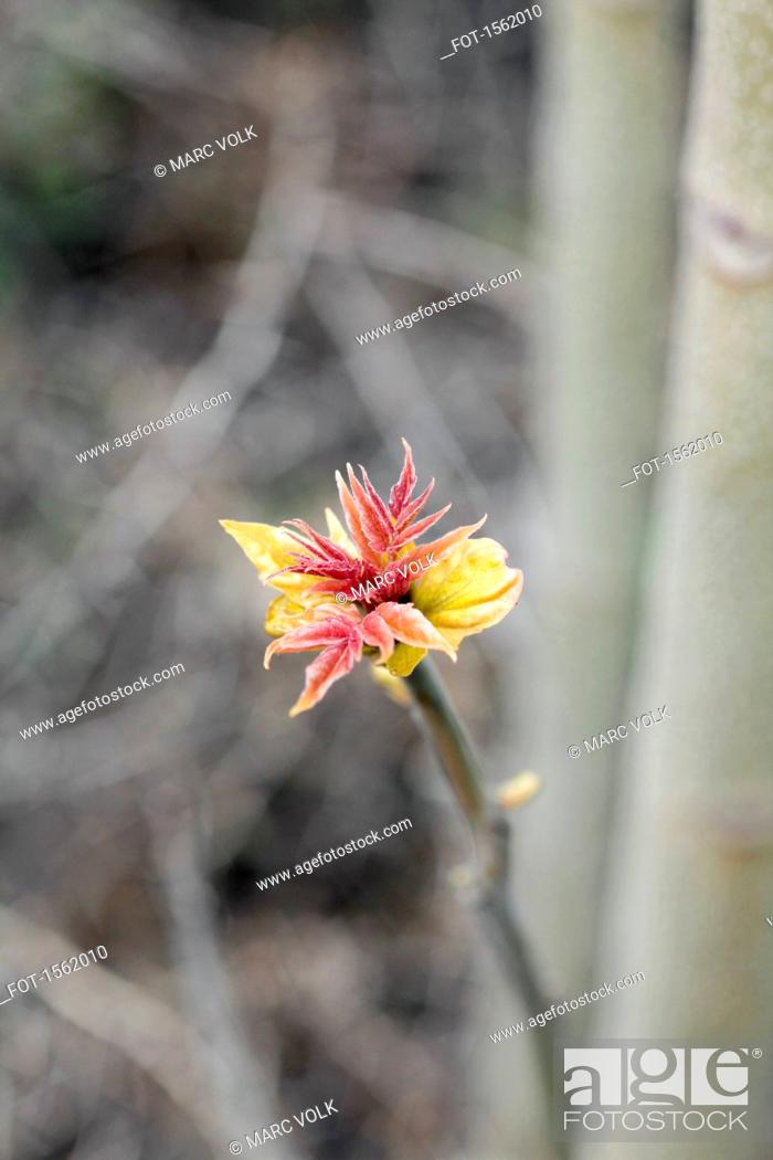 Stock Photo: Directly above shot of flower growing outdoors.