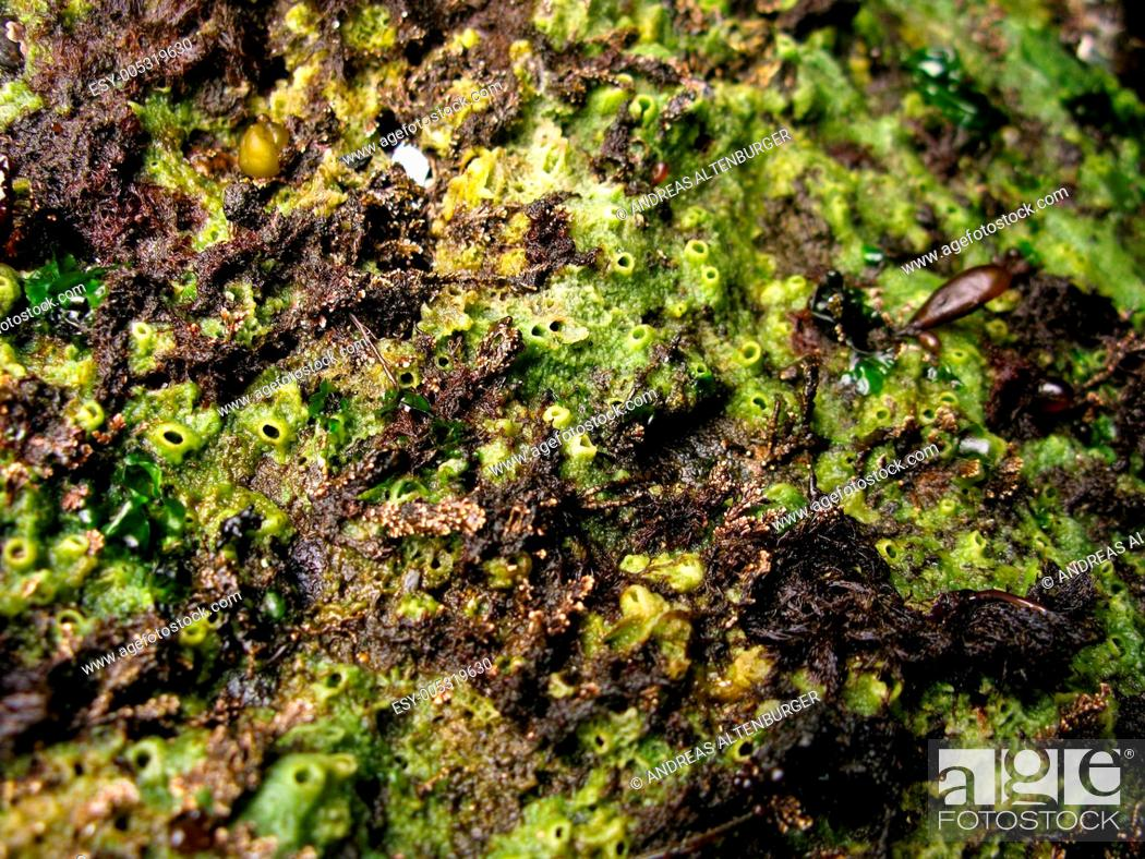 Stock Photo: Marine sponge, porifera.
