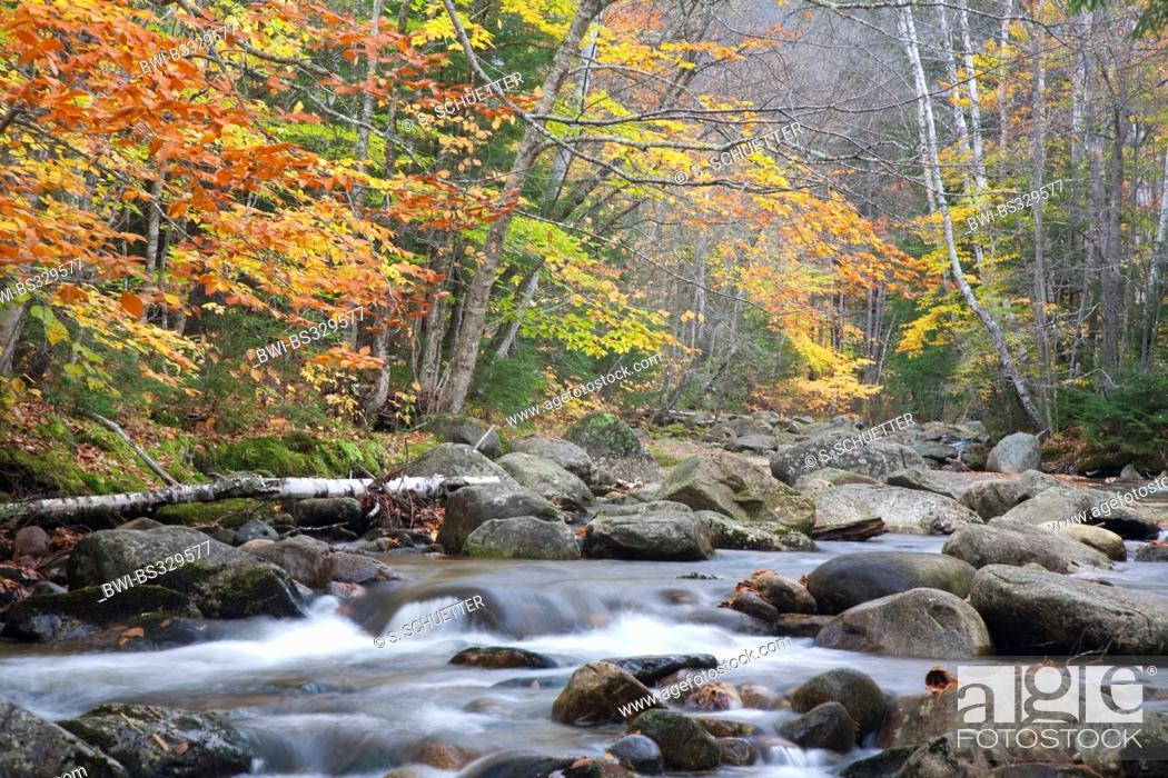 Stock Photo: mountain creek in autumn forest of the White Mountains, USA, Maine, Grafton Notch-State Park.