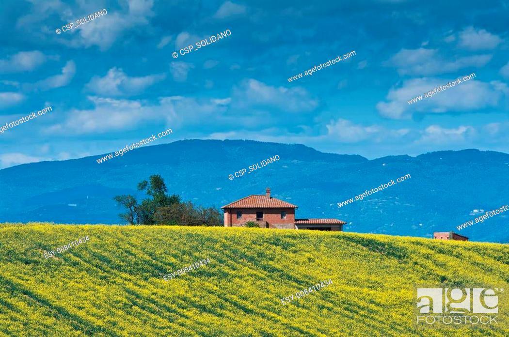 Stock Photo: Coltivazione di colza in Toscana.
