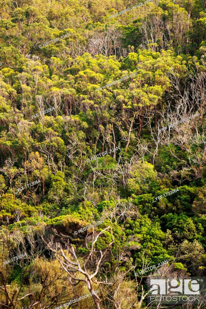 Stock Photo: Wye River Beach Forest.