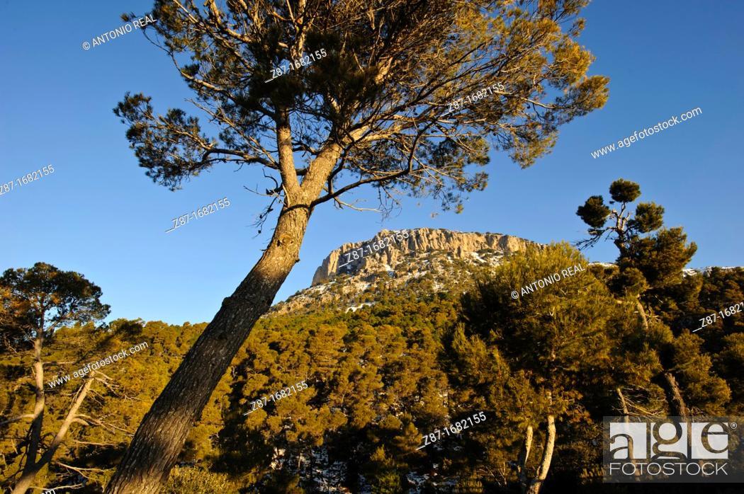 Stock Photo: Parque Regional de Sierra Espuña  Alhama de Murcia  Murcia.