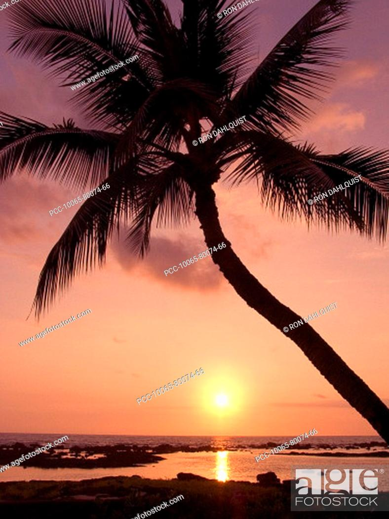 Stock Photo: Hawaii, Palm tree silhouette with pink sky over ocean at sunset.