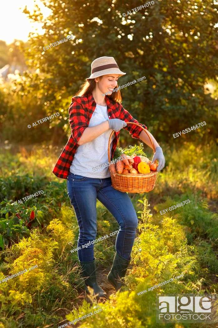 Stock Photo: Gardener with freshly harvested vegetables in garden on sunset. Happy woman farmer holding basket with crop. Gardening, agriculture, autumn harvest concept.