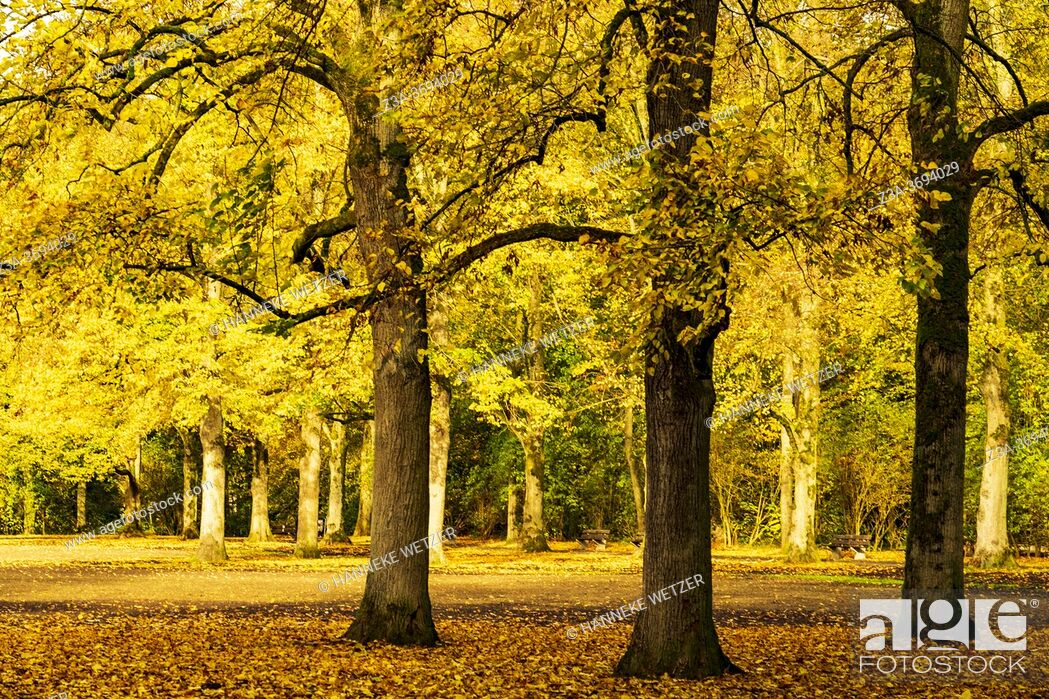 Imagen: Colorful autumn forest in the Netherlands, Europe.