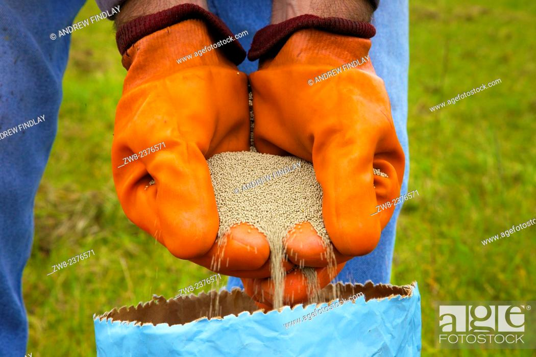 Stock Photo: Farmer pouring clover seed through gloved hands into bag.