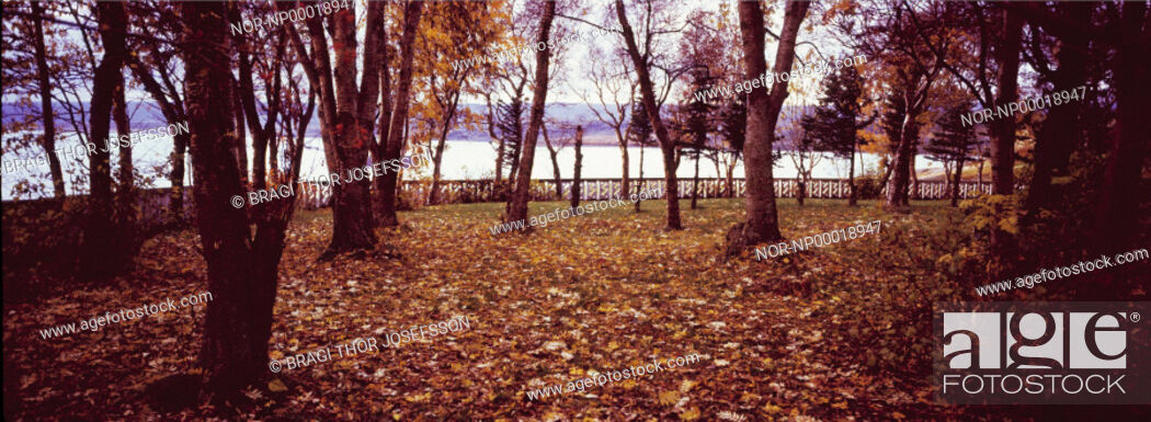 Stock Photo: Trees and autumn leaves, water in background.