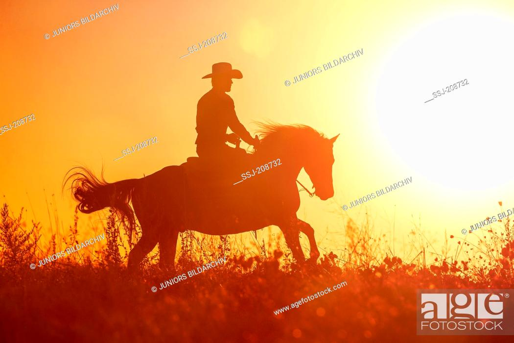 American Quarter Horse Rider On Western Horse In Gallop Silhouetted Against A Colorful Evening Sky Stock Photo Picture And Rights Managed Image Pic Ssj 208732 Agefotostock