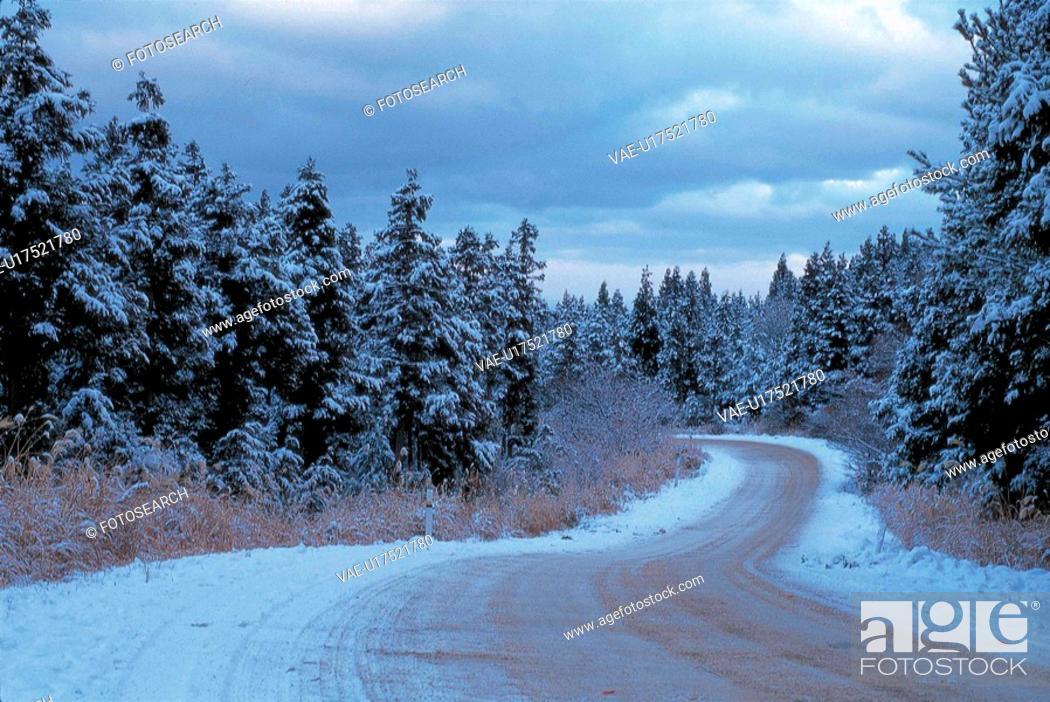 Stock Photo: snow, nature, winter, road, scenery, scene, tree.