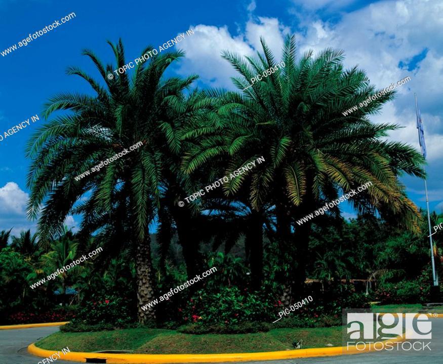 Stock Photo: Palms At Beach.