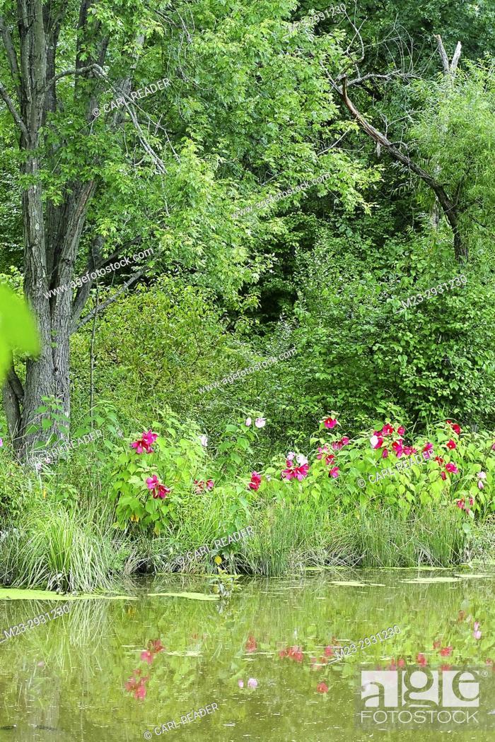 Stock Photo: Flowers along a lake's shoreline, Pennsylvania, USA.
