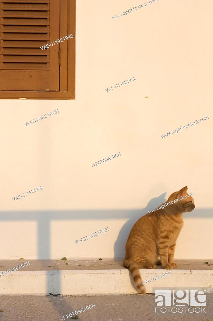 Stock Photo: Cat, Domestic Cat, Domestic Animals, Day, Adult Animal.