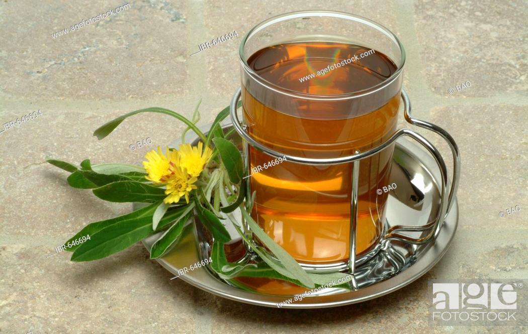 Stock Photo: Mouse-ear Hawkweed (Hieracium pilosella, Pilosella officinarum), herbal tea, medicinal tea.