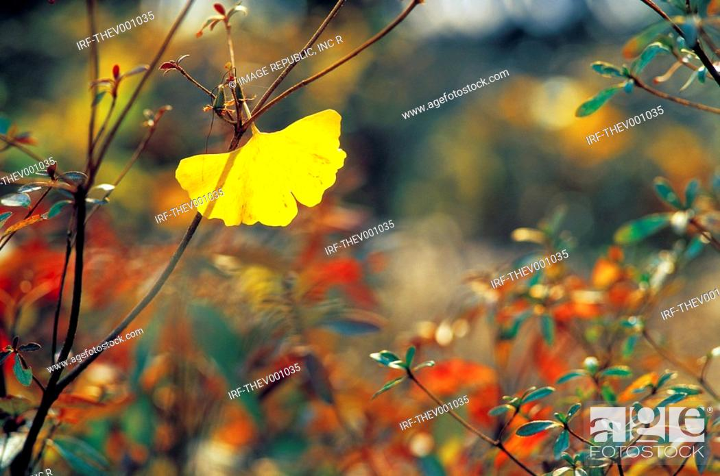 Stock Photo: leaves in autumn.