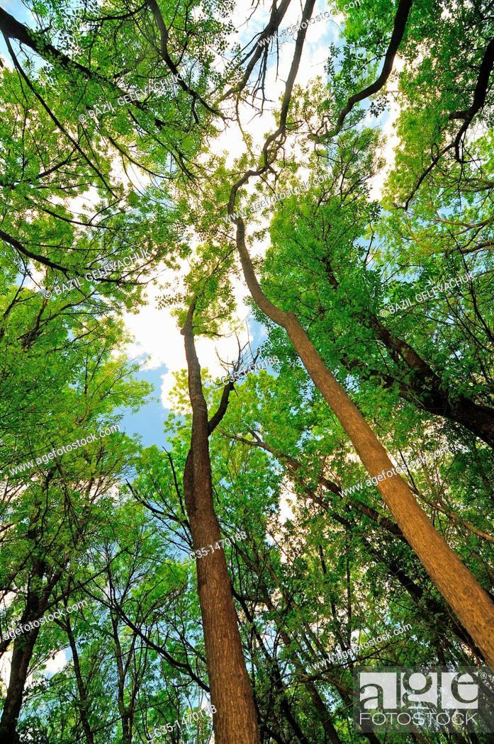 Stock Photo: Tree wood.