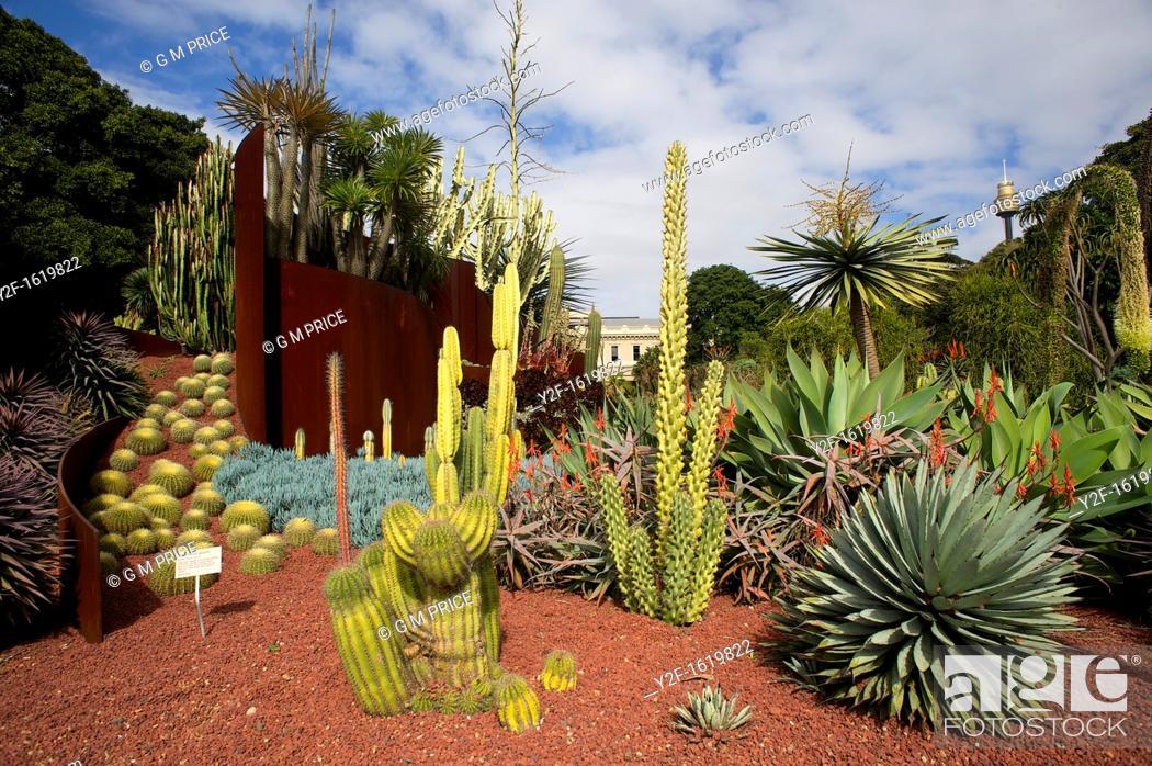 Stock Photo: desert plants, Royal Botanic Gardens, Sydney.