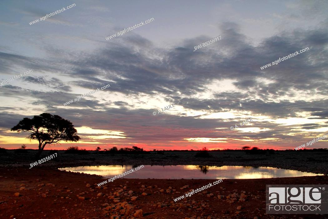 Stock Photo: evening light at a waterhole, Namibia, Etosha National Park, Okaukejo Lodge.