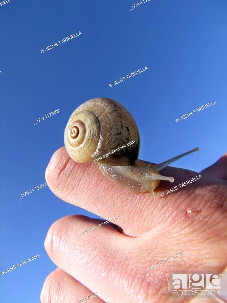 Stock Photo: Detail of a snail moving over the hand of a person.