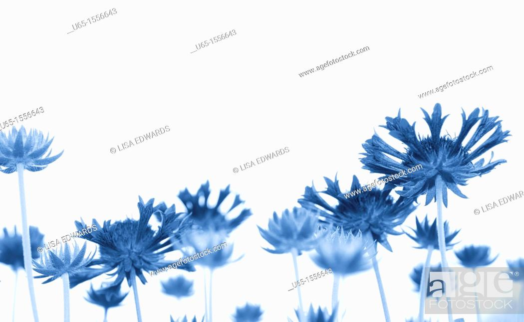 Stock Photo: Flowers with trumpet petals.