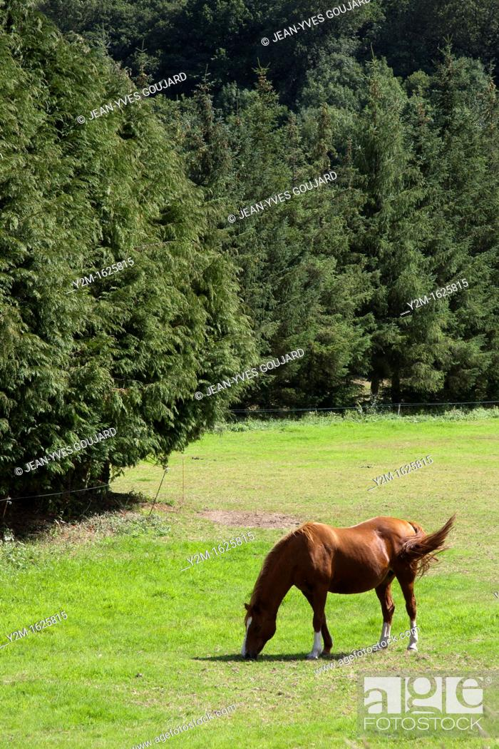 Stock Photo: Horse grass, nature and greenery.