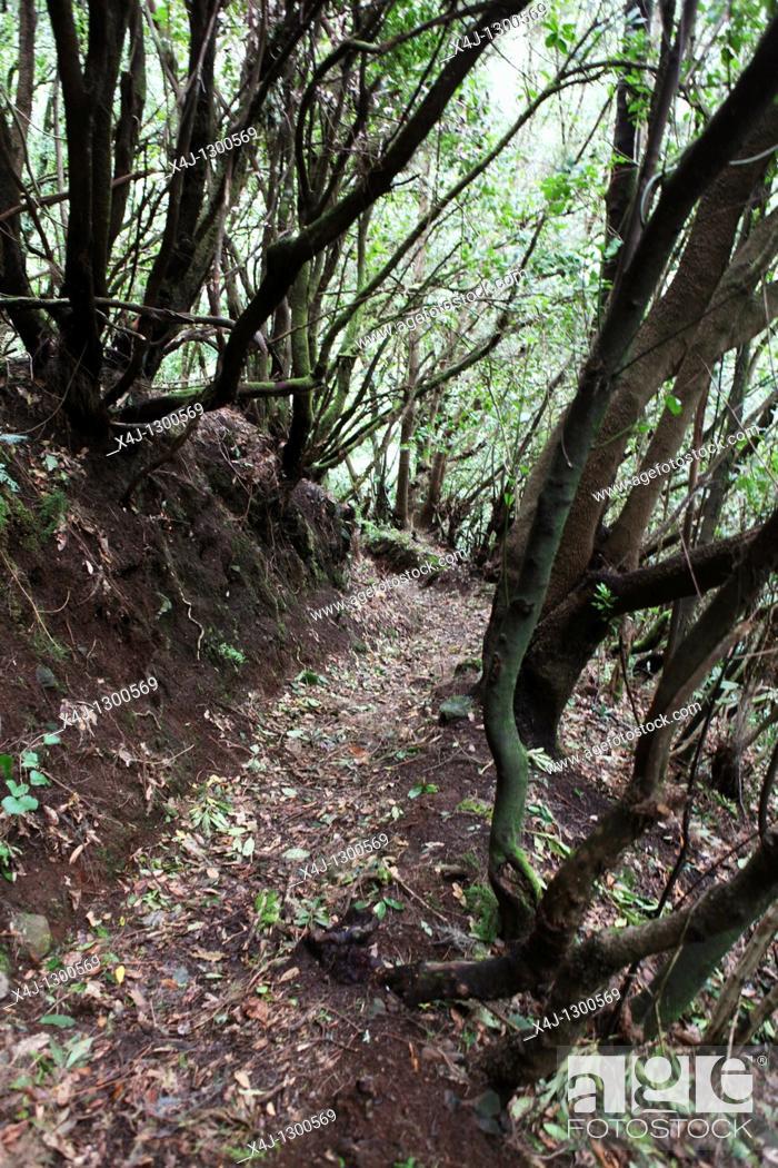 Stock Photo: Forest in La Palma Island, Canary Islands, Spain.