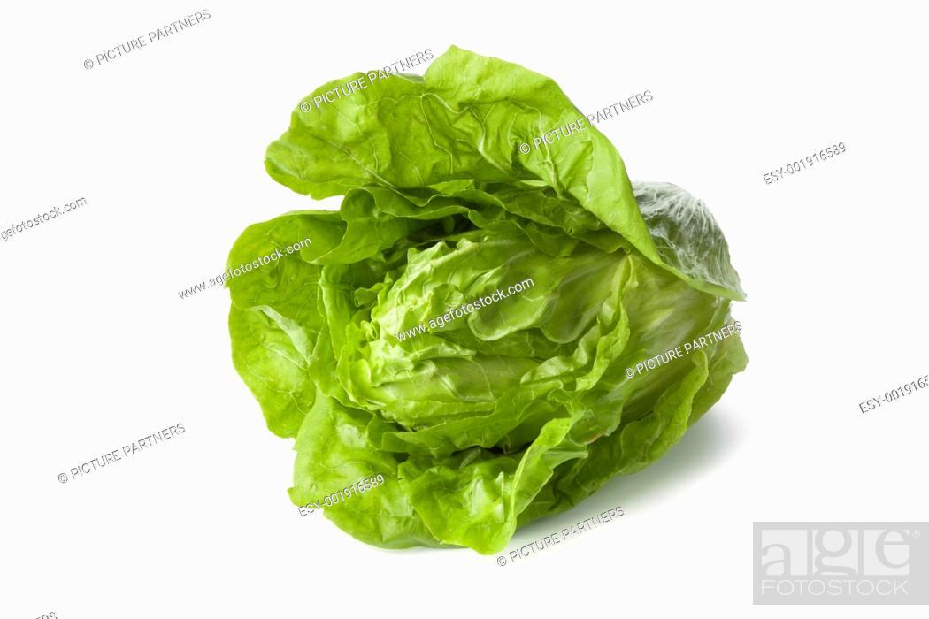 Photo de stock: Sugarloaf vegetable, a heirloom vegetable.