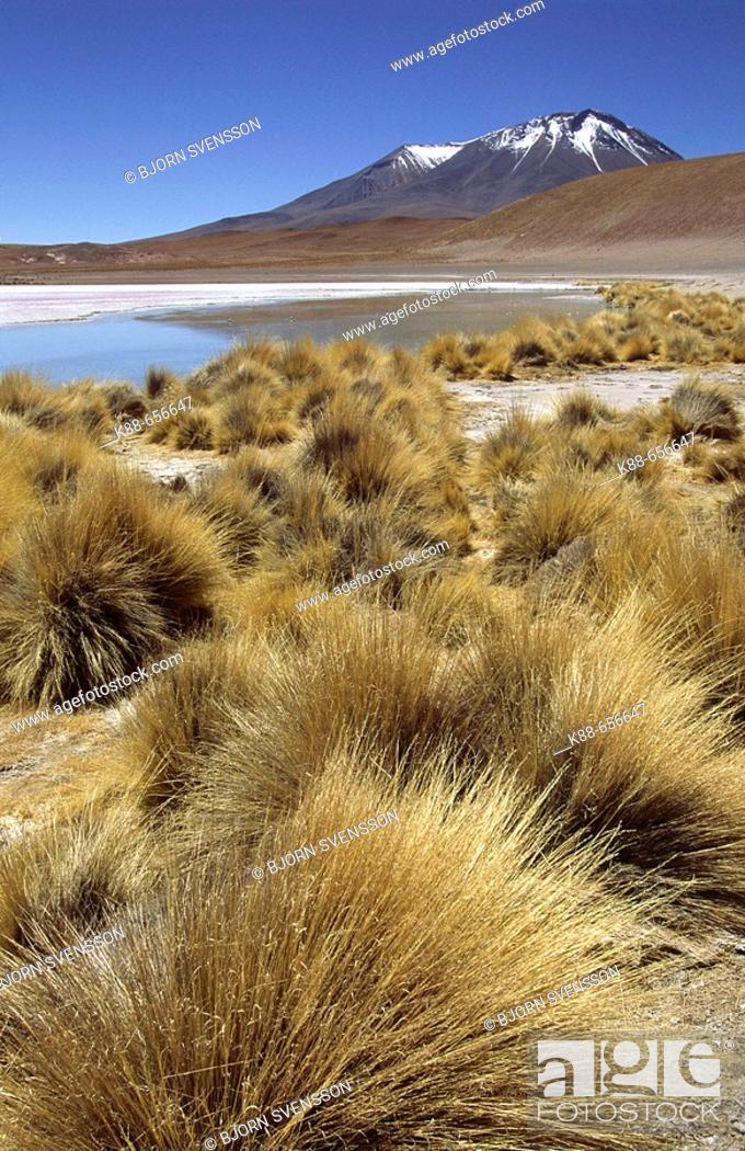 Stock Photo: Laguna Cañapa. South Lipez, Bolivia.