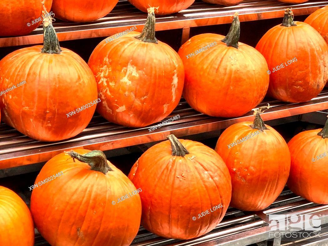Imagen: Pumpkins Displayed at an Outdoor Manhattan, NYC Food Market.