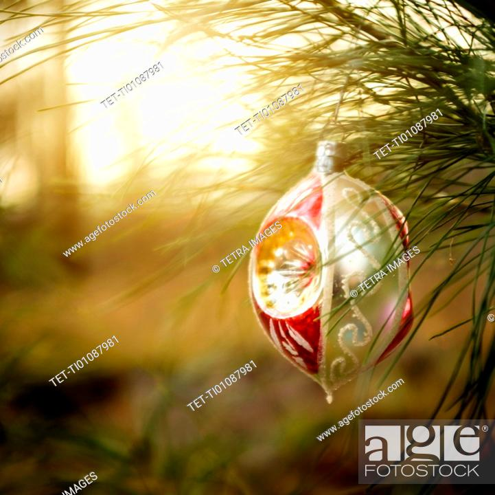 Stock Photo: Christmas ornaments hanging from tree.