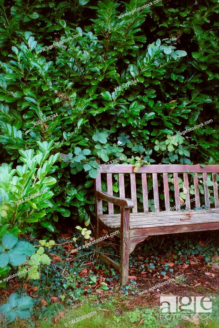 Stock Photo: Wooden bench in park with dense shrubs behind.