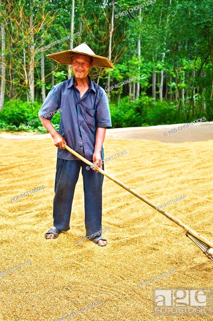 Stock Photo: Farmer drying rice in a field, Zhigou, Shandong Province, China.