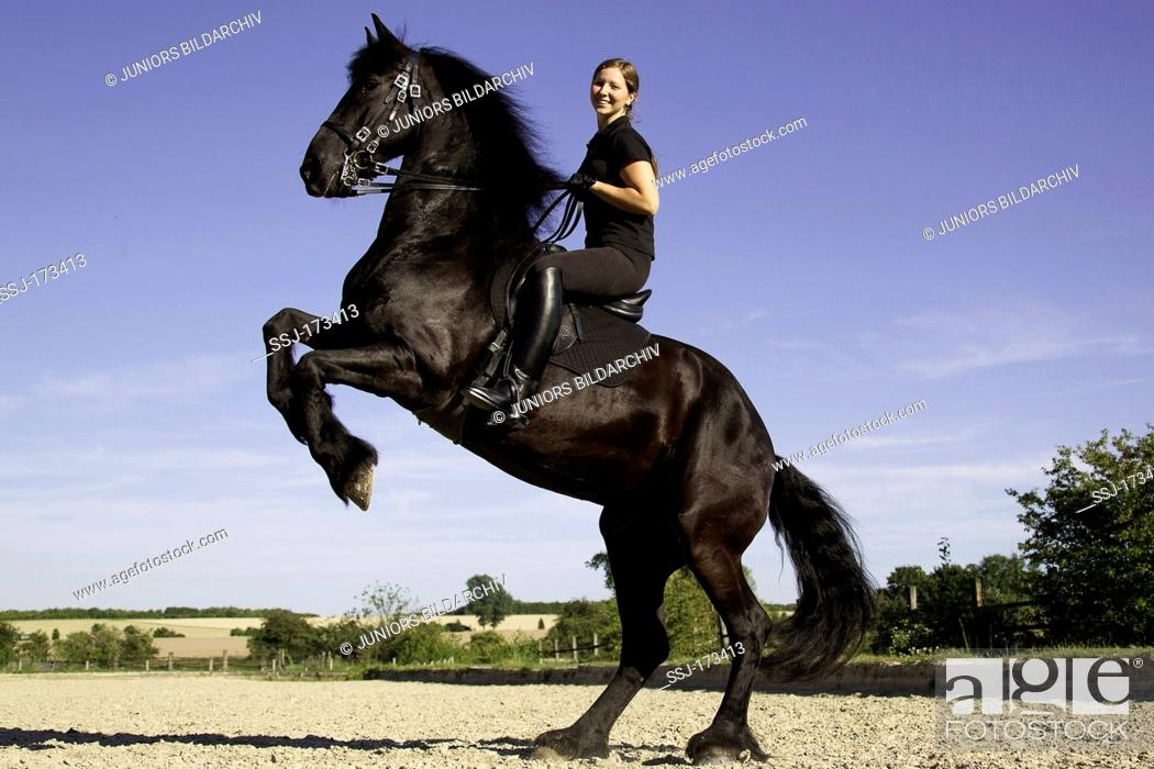 Friesian Horse With Rider Rearing Stock Photo Picture And Rights Managed Image Pic Ssj 173413 Agefotostock